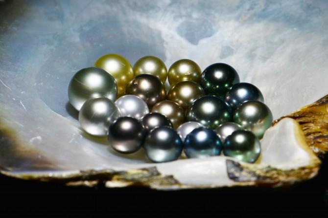 한국해양과학기술원(KIOST)이 흑진주조개를 인공 배양해 생산한 흑진주. 기존의 양식 흑진주보다 색깔이 다양하다. - 한국해양과학기술원 제공